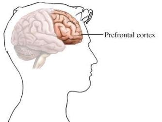 prefrontal_cortex_zps2bdb9e0d.jpg